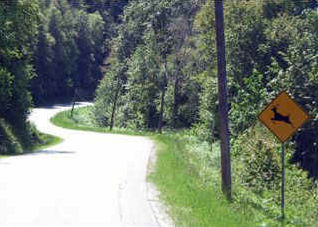 Deer Sign and Road